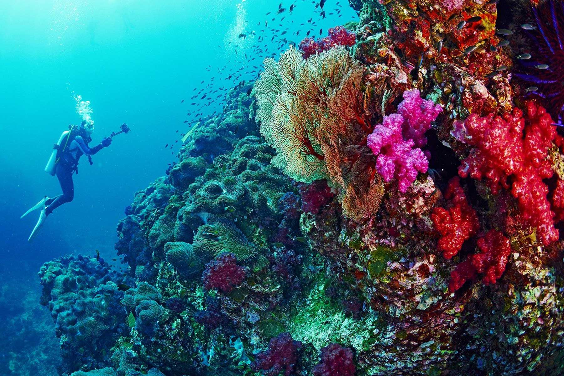 Coral reefs red sea